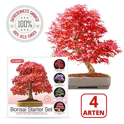 Bonsai Starter Kit | 4 Verschiedene Bonsai Arten | Komplettes Set | Geeignet für Anfänger | Züchte deinen eigenen Bonsai | Anzuchtset in Premiumqualität von Tillmann\'s Deutschland