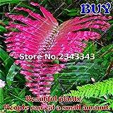Pinkdose Rare bonsai Creeper Vines Erba misti dell'arcobaleno Foliage Piante Per BonsaïPianta Giardino Fern bonsai 2017 Nuove Sementes Vendita 100pcs: 2