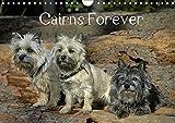 Cairns Forever (Wandkalender 2019 DIN A4 quer): Eine Reise mit dem Cairn durch die Jahreszeiten (Monatskalender, 14 Seiten ) (CALVENDO Tiere)