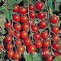 New Bonsai Tomatensamen 100pcs 10kinds Mischung Gemüsesamen Novel Plant for Garden Kostenloser Versand Dark Red von SVI - Du und dein Garten