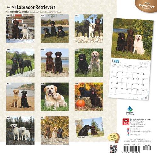 Labrador Retrievers 2016 Wall