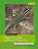 Taggeckos der Gattung Phelsuma (Terrarien-Bibliothek)