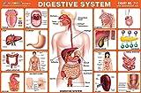 Pre - primär Kinder lernen Digestive System Packung von 25 Pictorial Aufklebers