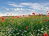 wandmotiv24 Fototapete Vliestapete Blumenwiese KT493 Größe: 350x260cm Feld Sommer Blüten