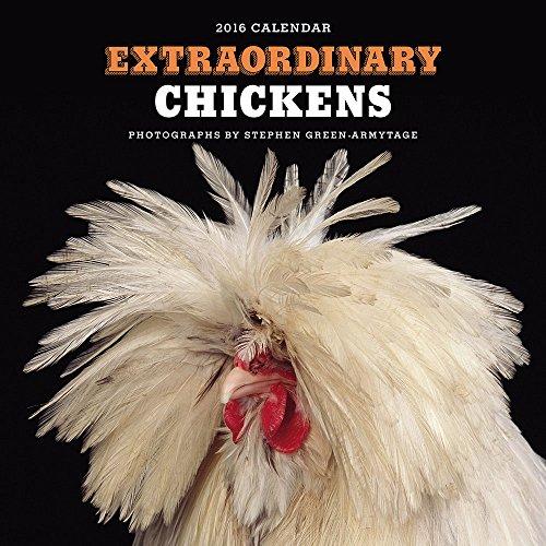 Extraordinary Chickens 2016 Calendar
