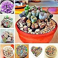 Lonlier Semillas de Suculentas 10/20/50 pcs Bonsai Semillas de Colores para Jardín Huerto