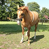 61qNtRY8prL. SL160  Lunging Aid Lunging System for Pony, COB, Full, XL Full, Size:FULL UK best buy Review