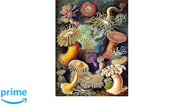 NATURE ART ERNST HAECKEL SEA PLANT BIOLOGY GERMANY VINTAGE POSTER PRINT 872PY