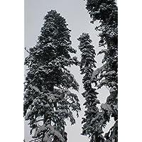 Weihnachtsbaum Samen.Suchergebnis Auf Amazon De Für Weihnachtsbaum Samen Blumen