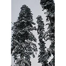 Weihnachtsbaum Samen.Suchergebnis Auf Amazon De Für Nordmanntanne Samen
