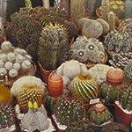 Cactus Mixed Seeds
