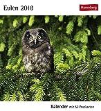 Eulen - Kalender 2018: Kalender mit 53 Postkarten