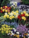 Dominik Blumen und Pflanzen,