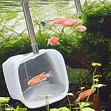 PROKTH Small Fish Tank net allungabile con manico lungo, a scomparsa 3D acquario rete da pesca tasca gamberetti guadino (colore casuale)