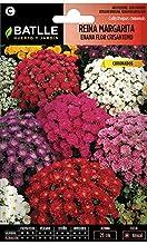 Semi di Fiori - Regina Margherita Nano Fiore Crisantemo Assortiti - Batlle