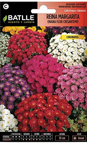Semillas de Flores - Reina Margarita enana flor Crisantemo variada - Batlle