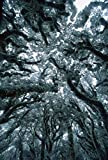 The Poster Corp Colin Monteath – Autumn Snow on Beech Trees Routeburn Track Mt Aspiring National Park New Zealand Kuns