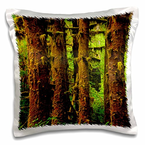 Danita Delimont - Rainforests - Sitka Spruce, Hoh Rainforest, Washington, USA - US48 MHE0008 - Michel Hersen - 16x16 inch Pillow Case (pc_148353_1)