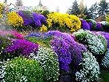 grandi promozioni 50pcs perenne Groundcover roccia crescione Semi rari semi rossi Bonsai seme Giapponese Home Erba ornamentale per il giardino