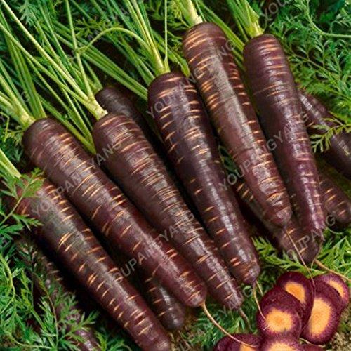 300pcs/sac parisien long carotte Semences non-OGM Semences Potagères Cuisine aide alimentaire extérieure pour Cache-pot jardin Noir