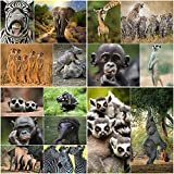 """Postkarten-Set""""16 TIERE AUS AFRIKA"""" (16 verschiedene Tier-Karten)"""" für Sammler/Postcrossing oder als Lehrmaterial für Biologie von EDITION COLIBRI"""