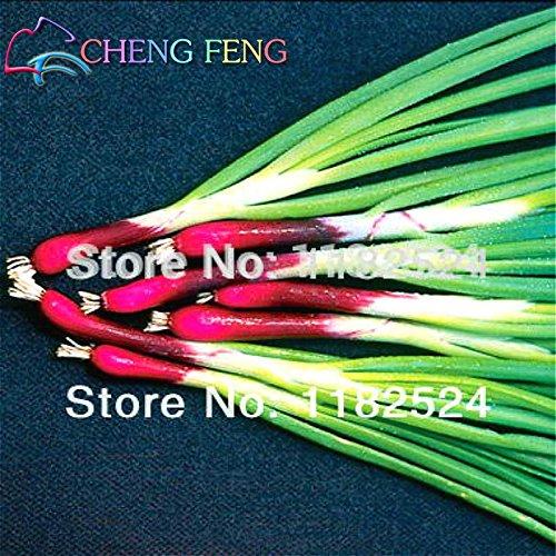 Original Paquet 50 Graines / Paquet Four Seasons Oignon Graines de légumes Scallion Echalote Graines Ciboulette Mini Plantes Balcon légumes