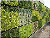 Parete verde sistema modulare giardino verticale per casa, ufficio, area commerciale, decorazione interna * * * Piante non incluse * * *
