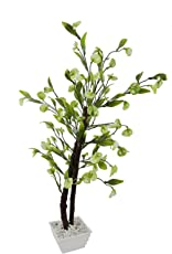 FancyMart Artificial Disc Leaves Bonsai Tree with White Square Pot(Height 60 cms / 24 inchs)