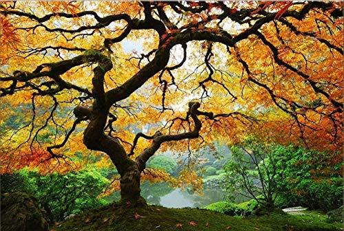 Startonight, nachtleuchtende Leinwandbild, Wandbild Baum, Ahorn im Herbst 60 cm x 90 cm