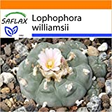 SAFLAX - Garden in the Bag - Peyote - 20 semi - Lophophora williamsii