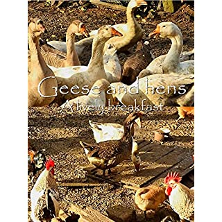 Geese and hens. A lively breakfast