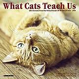 What Cats Teach Us 2018 Mini Wall Calendar
