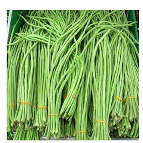 20 graines de haricot long kilomètre vert jardin potager potage cuisine