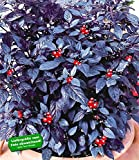 "BALDUR-Garten Pfeffer-Pflanze ""Black Pearl"""