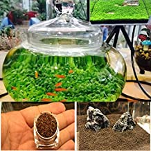 Bolange Estética Hermosa Planta de decoración de Acuario Tanque de Peces Hierba de Agua acuática Semillas