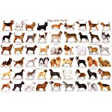 123Posters Dogs of the World Popular Breeds Chart Poster 36
