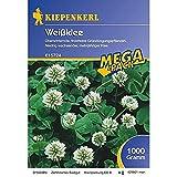 Kiepenkerl Weissklee | Untersaat für Gemüsepflanzen | tolle Bieneweide | 1 kg