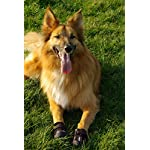 4Paws Dog Boot Active Paw Protectors - (1 x Pair - 2 boots) Reflective and Robust with rubber grip sole and breathable… 10