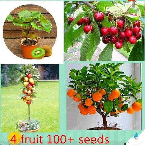 fruit 4 nature, les graines d'arbres fruitiers de bonsaïs, légumes et graines de fruits totale pomme cerise kiwi orange, graines 100+ plante de jardin non-OGM 4 type fruits