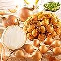 Steckzwiebeln Gelbe Stuttgarter Riesen - Zwiebelfleisch reinweiß - pikant-kräftiges und zugleich mild-sanftes Aroma - Größe 21/24 - Packung mit 500 g von Unbekannt auf Du und dein Garten