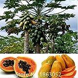 Fruchtsamen RARE 20 Samen Zwerg hovey Papaya Baum Pflanze Container Bonsai Baum für Haus Garten Pflanze leckere Früchte