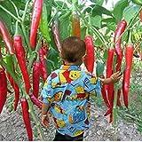 50 Samen / pack Gemüse Samen zehn Riesen Red Neue Gewürze Spicy Chili Samen Pflanzen bis 50 cm