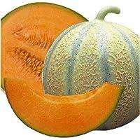 PREMIER SEEDS DIRECT - Melon - Cantaloupe DI CHARENTAIS - 175 Finest Seeds