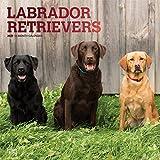 Labrador Retrievers 2019 - 18-Monatskalender mit freier DogDays-App (Wall-Kalender)