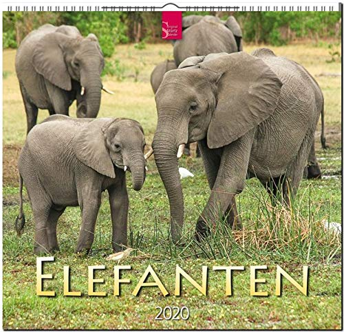 Elefanten: Original Stürtz-Kalender 2020 - Mittelformat-Kalender 33 x 31 cm