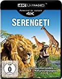 Serengeti  (4K Ultra HD) [Blu-ray]