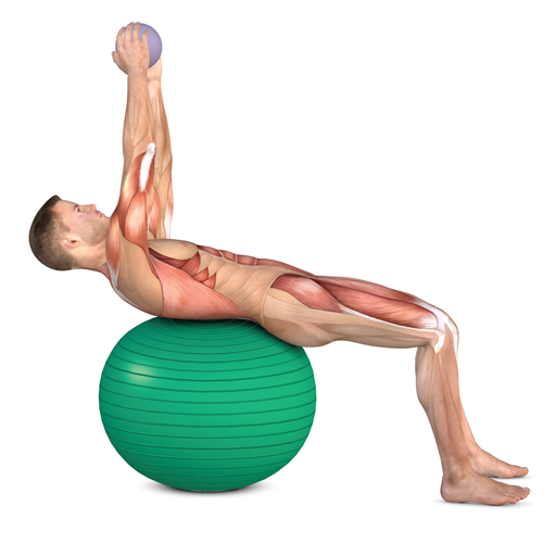 Back Exercises for a Strong Spine & Core - Prevent Back Pain