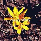 Pinkdose Colchicum Sampler Pflanzen Herbst-Zeitlose Blooming Bonsai Drei Blütehausgarten Einfache Bodendecker 100PCS wachsen: Schwarz