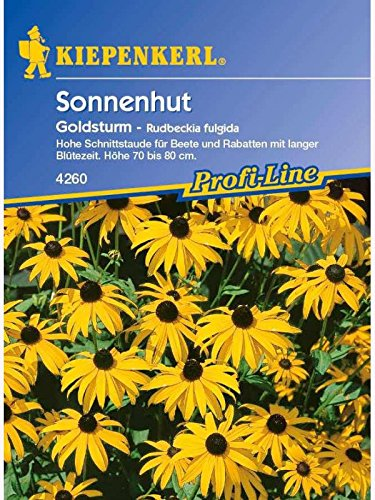 Rudbeckia fulgida Sonnenhut Goldsturm