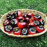 Indigo ''Blue Beauty'' 10 Samen -Lecker Indigo Beefsteak-Tomate-